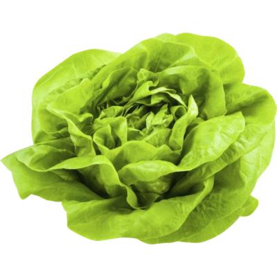 Fejes saláta